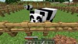 i Got Two Beautiful Cute Pandas in Minecraft